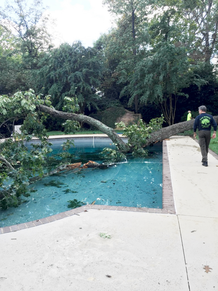 Emergency Tree Service in Charlotte, NC