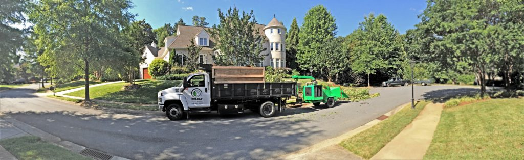 Releaf Tree Works provides tree services in Charlotte, North Carolina