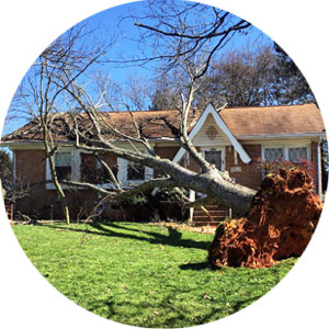 Emergency-Tree-Care-Circle