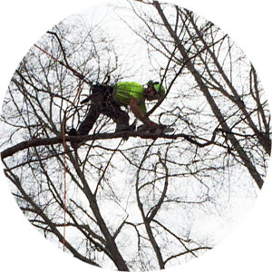 Tree-Trimming-Circle